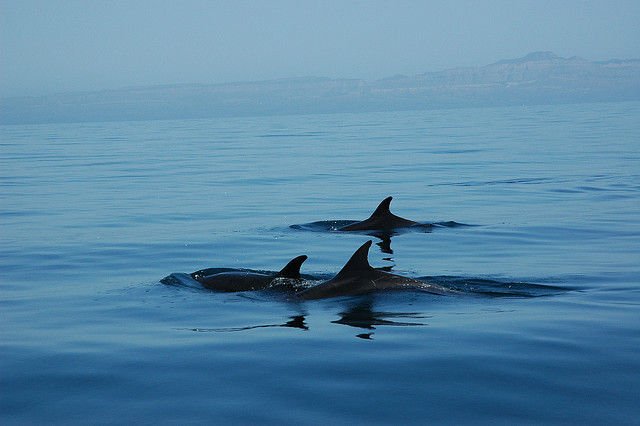 sea of cortez dolphins