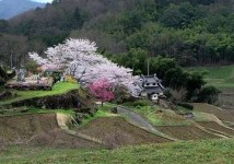 Japan Countryside